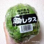 レタス lettuce