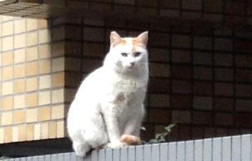 早稲田 塀猫