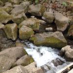 神田川の源流