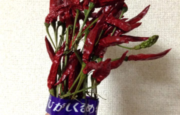 Red peppers 東久留米特産 唐辛子